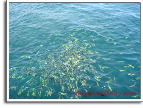 Krabi Snorkelling Diving